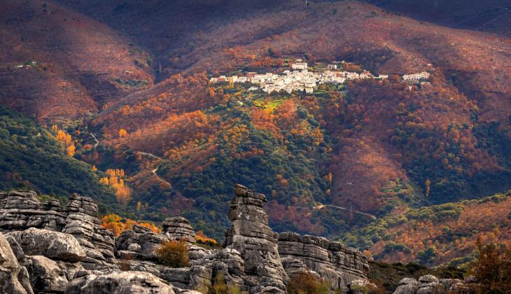 Pinsapo de la Escalareta, Serranía de Ronda