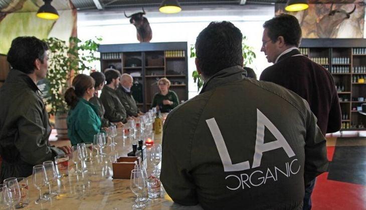 La Organic, aceite de oliva turismo Málaga