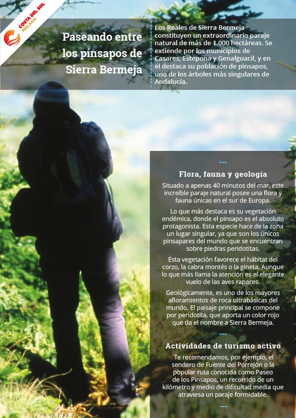 Pinsapos de Sierra Bermeja