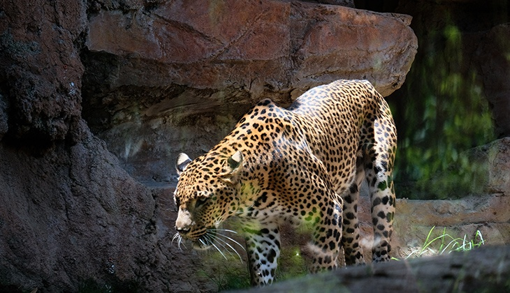 Bioparc Fuengirola: Respect for nature and preservation of species
