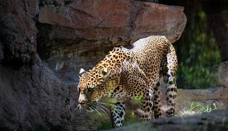 Bioparc Fuengirola: Le respect de la nature et la conservation des espèces