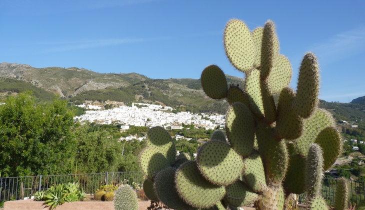Visiting the Cactus Garden in Casarabonela