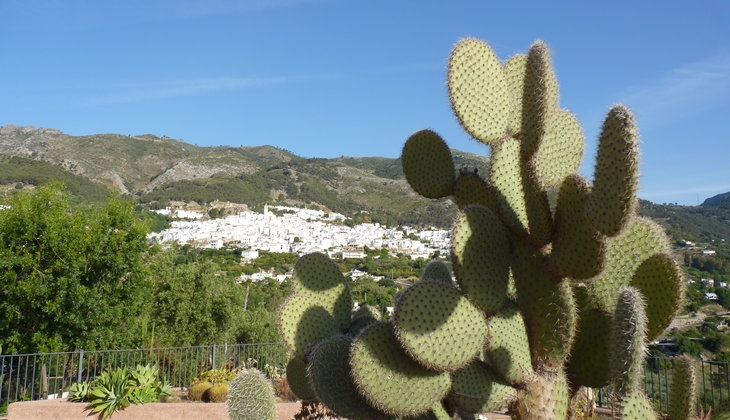 Visiting the Cactus Garden in Casarabonela
